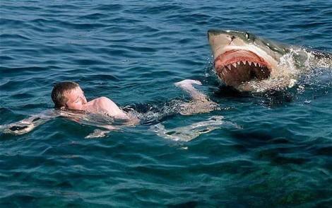нападение акул на человека