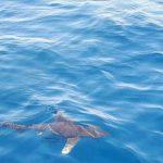 Акулы в Египте фото и видео