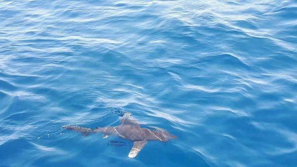 Акулы в Египте